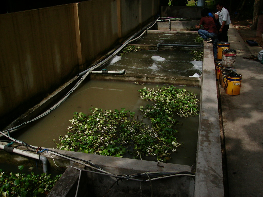 phương pháp xử lý nước thải sinh hoạt hiệu quả nhất