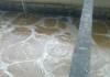 Mua bùn vi sinh ở Đồng Nai