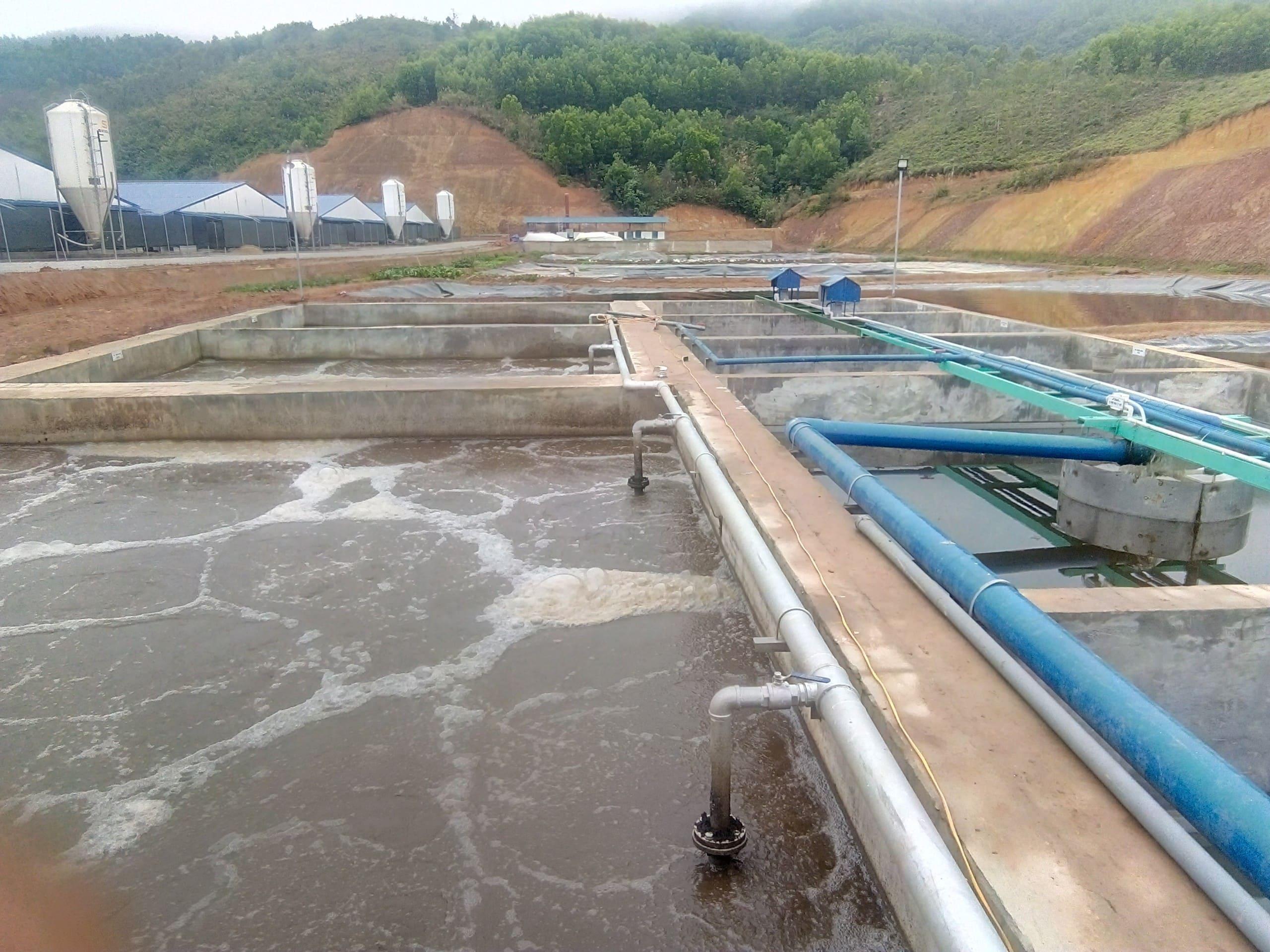 Xử lý nước thải chăn nuôi lợn tại Thái Bình