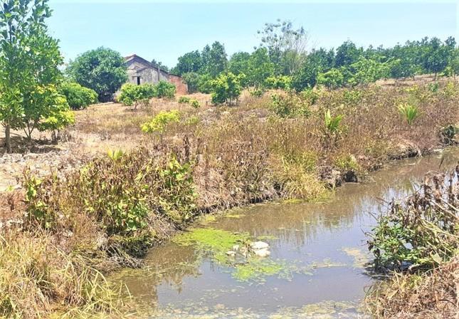 Hình 1. Nước thải chăn nuôi chưa xử lý triệt để gây ô nhiễm môi trường tại Thôn Nam Tiến - Cư Jút