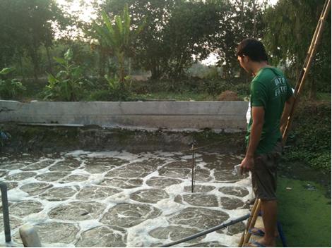 xử lý nước thải chăn nuôi heo chi phí thấp